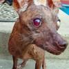 Concours du chien le plus laid du monde – 2007