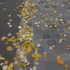 Ma photo du jour le 16-11-2012