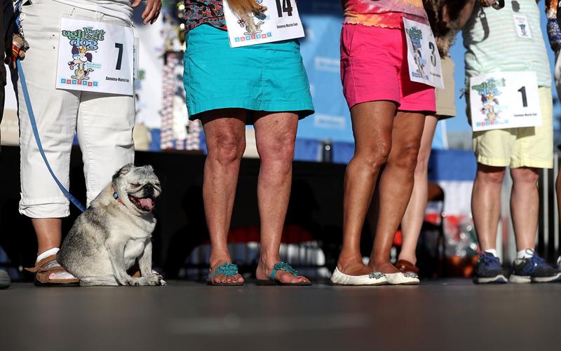 Concours du chien le plus laid du monde Winner 2016 World's Ugliest Dog