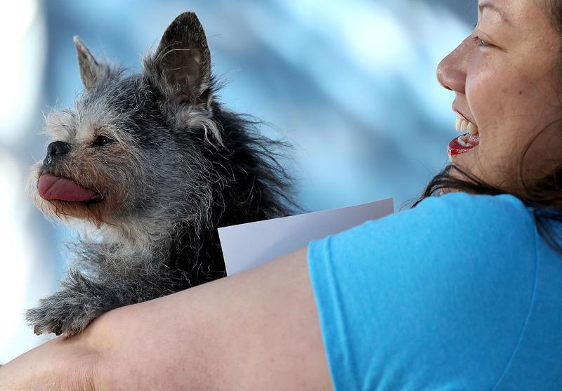Concours du chien le plus laid du monde Winner 2017 World's Ugliest Dog