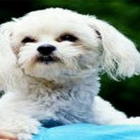 Le chien millionnaire