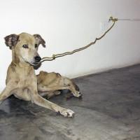 Qu'est ce que l'art? …..un chien mort?