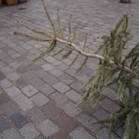 Joyeux et mortuaire Noël (2009)