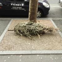 Cadavres de rues: Édition 2013