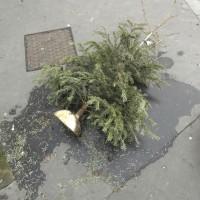 Cadavres de rues: Édition 2014