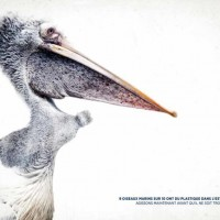 Campagne publicitaire WWF