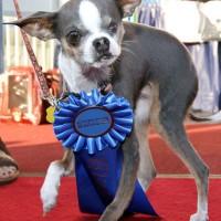 Concours du chien le plus laid du monde 2010