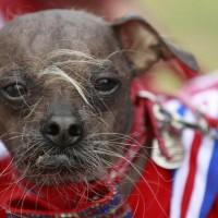 Concours du chien le plus laid du monde 2012
