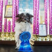 Concours du chien le plus laid du monde 2014