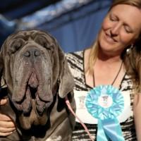 Concours du chien le plus laid du monde 2017