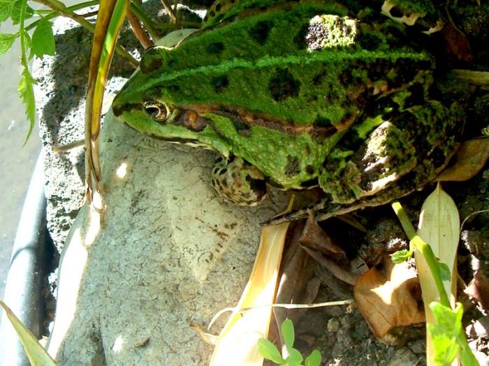 Ma seconde photo du jour le 11-05-2008