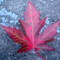 Mon voyage au Canada à Montréal