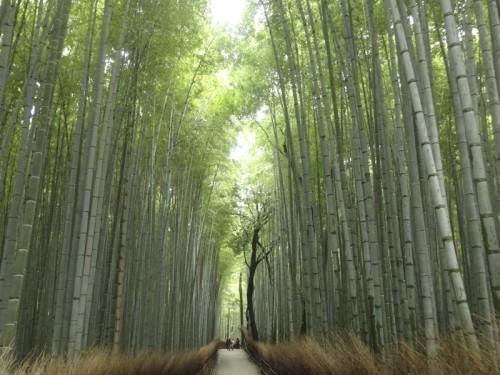 Mon voyage à Kyoto au Japon 2