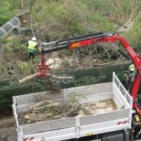 Abattage des arbres des Halles