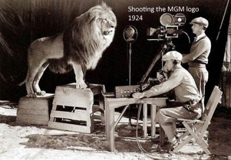 Enregistrement du lion de la production MGM