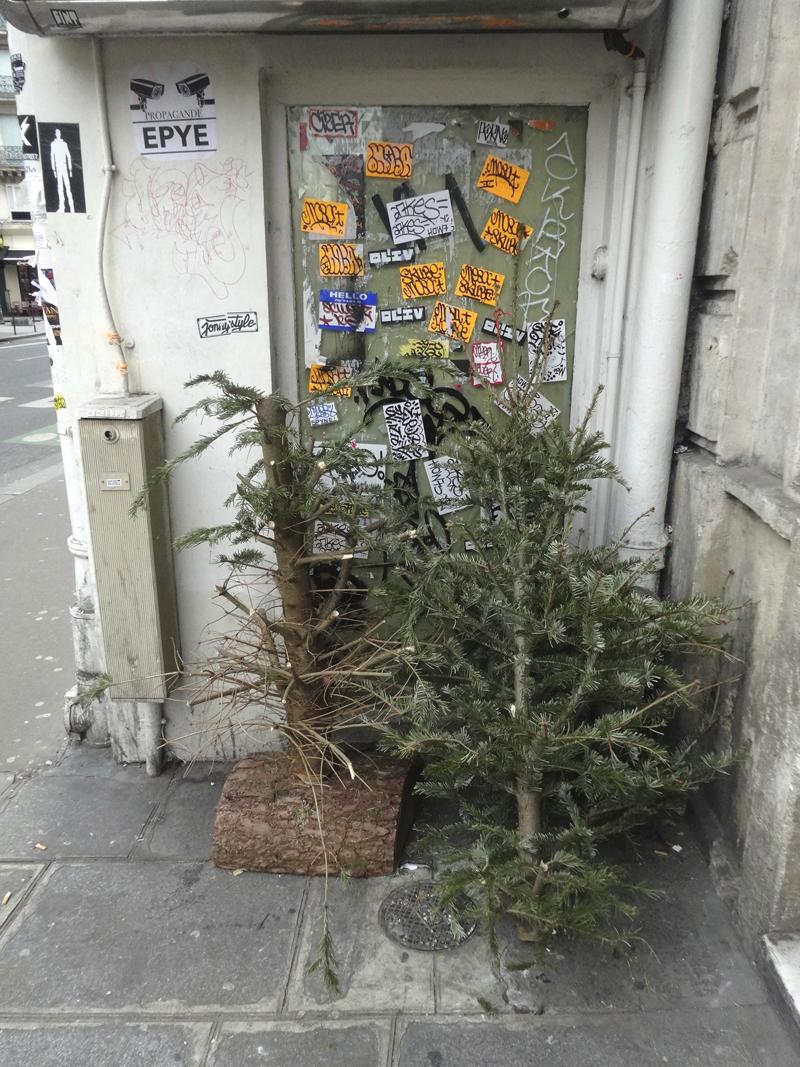 Cadavre de sapin de Noël