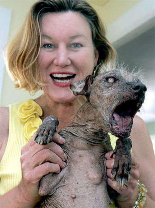 Concours du chien le plus laid du monde en 2007