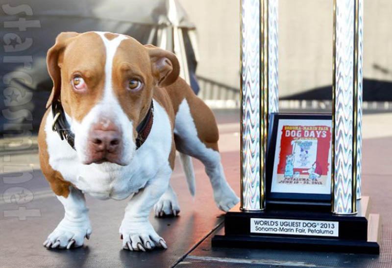 Concours du chien le plus laid du monde en 2013