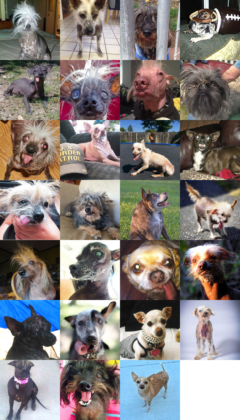 Les 27 participants 2015 concours du chien le plus laid du monde Others contestants 2015 World's Ugliest Dog