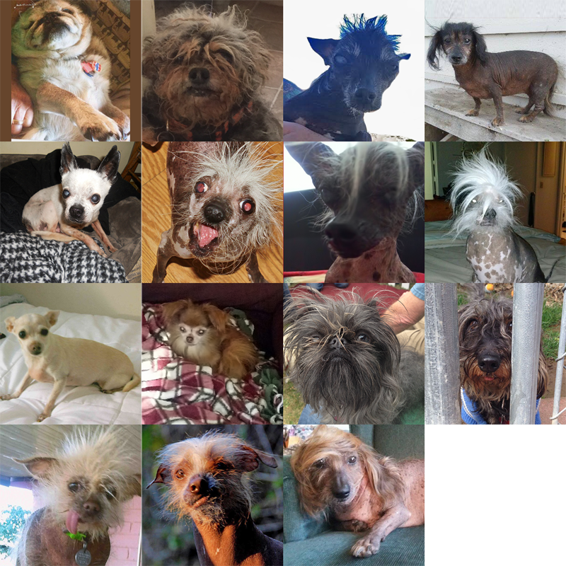 Les 15 participants du concours du chien le plus laid du monde 2016 Others contestants  World's Ugliest Dog 2016