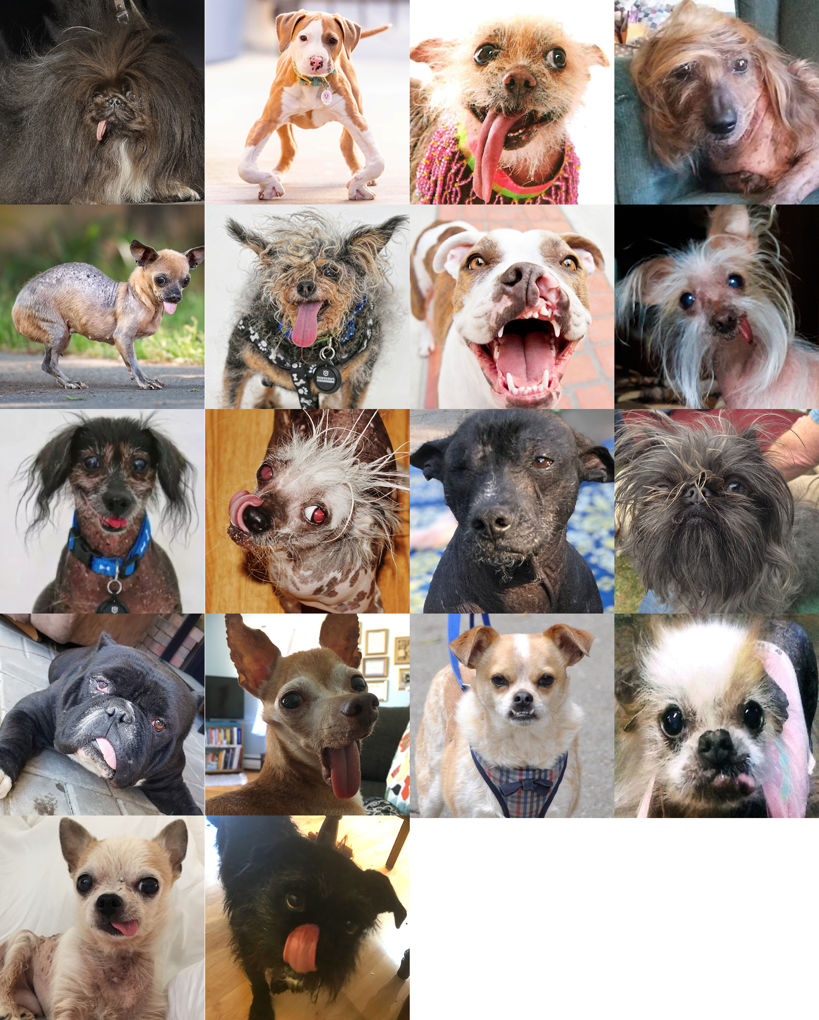 Les 18 participants du concours du chien le plus laid du monde 2019 Others contestants  World's Ugliest Dog 2019