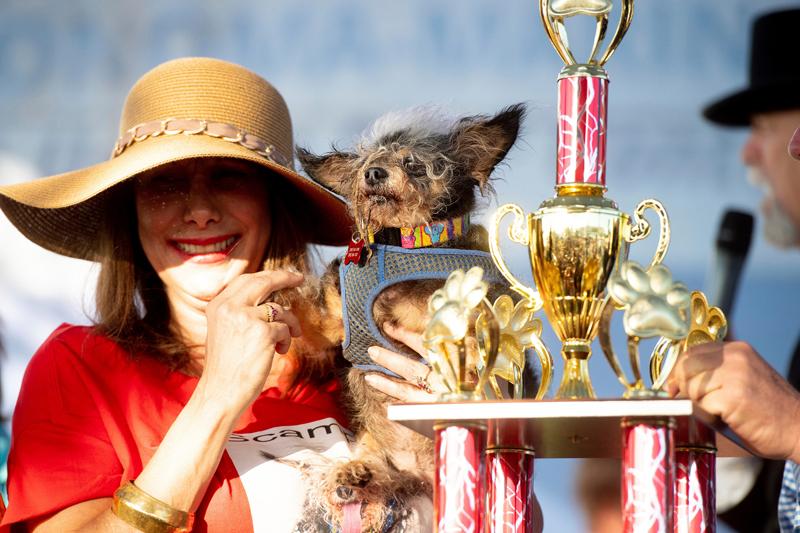 Concours du chien le plus laid du monde 2019 World's Ugliest Dog 2019
