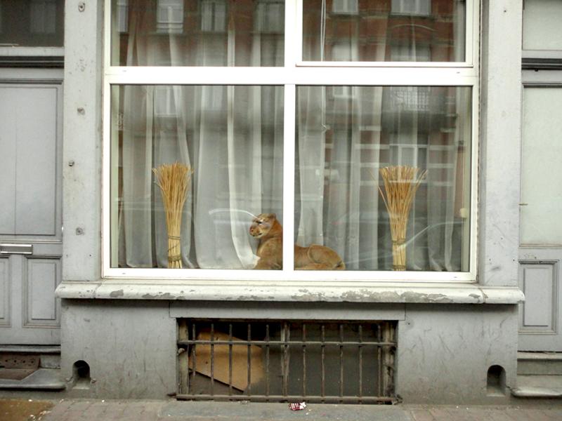 Photo du jour le 21-06-2011 du peintre contemporain Français Jérémie Baldocchi