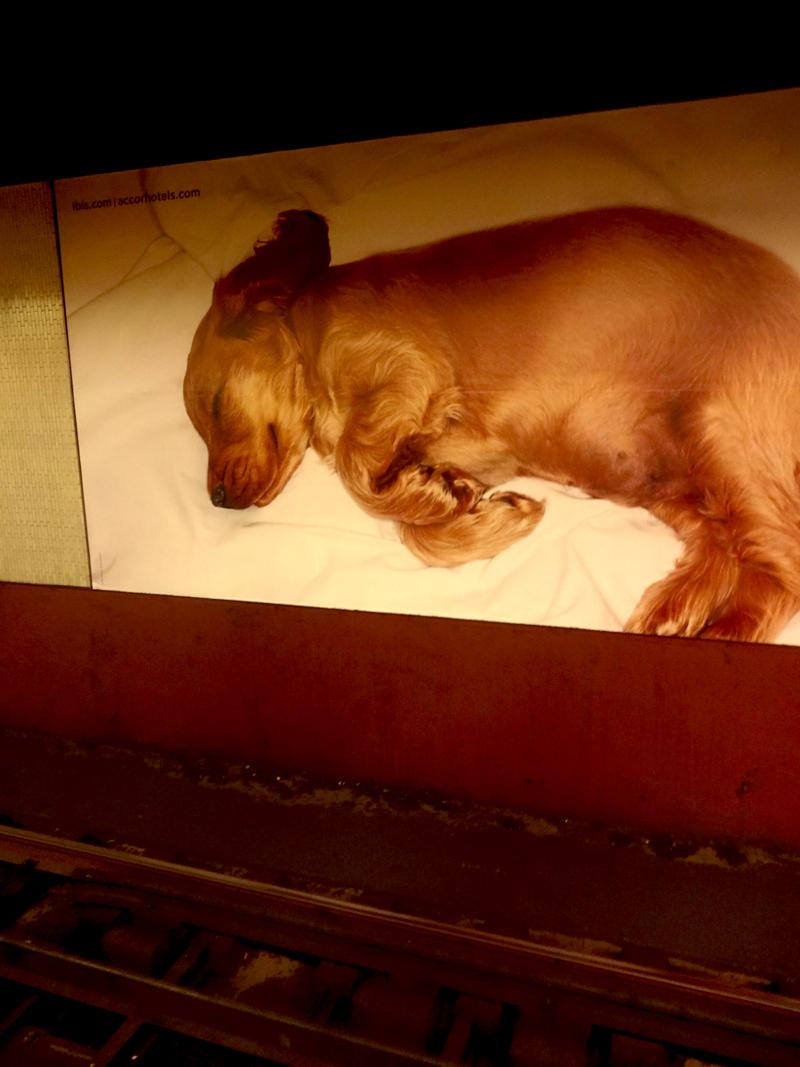 Photo du jour le 30-10-2012 du peintre contemporain Français Jeremie Baldocchi