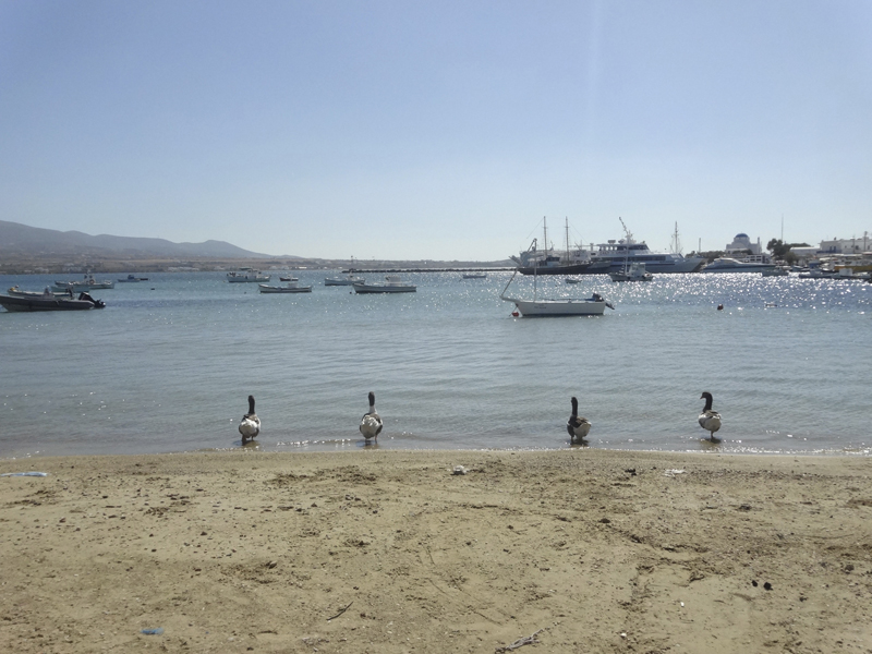 Mon voyage en Grèce - île de Paros - Antiparos