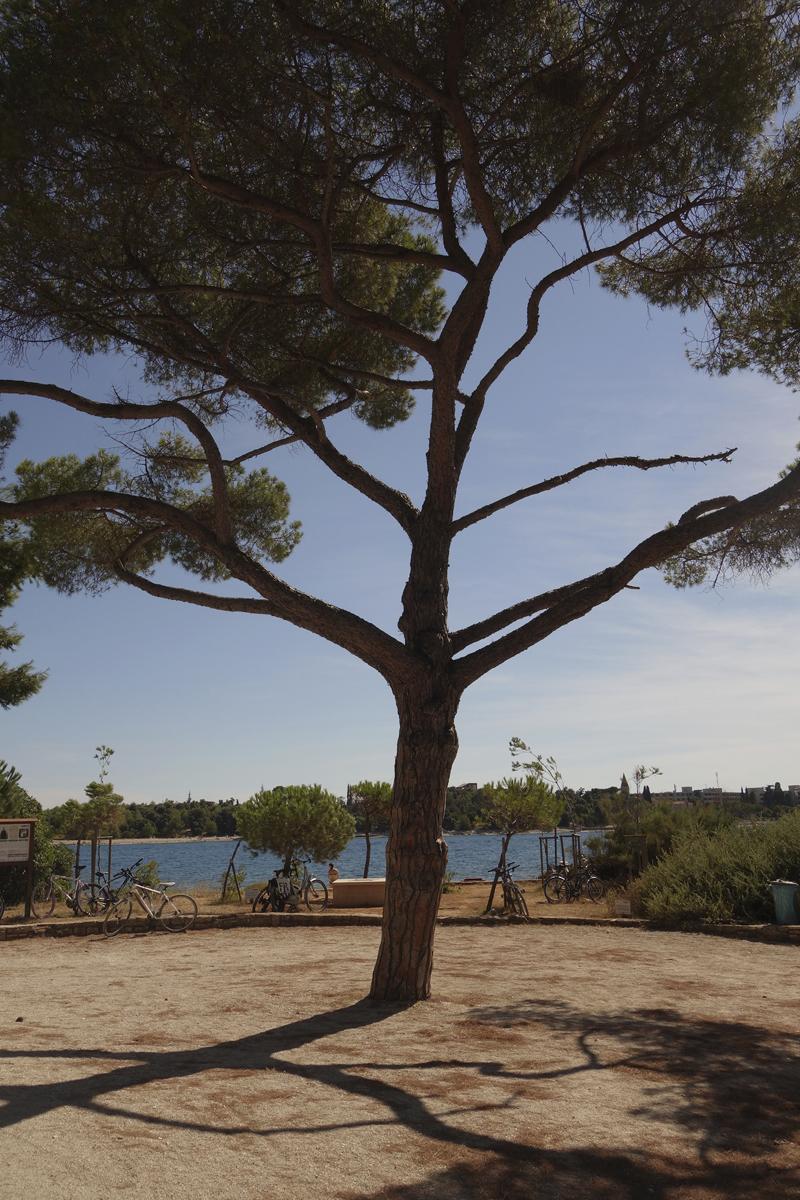 Mon voyage au Parc Naturel Golden Cape Forest à Rovinj en Croatie