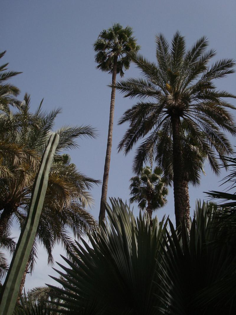 Mon voyage au Maroc: Le Jardins de Majorelles à Marrakech