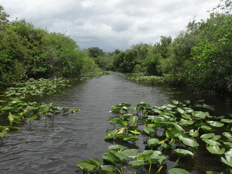 Mon voyage aux Everglades à Miami en Floride aux Etats Unis
